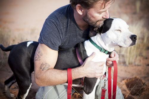 Educar um cachorro ciumento