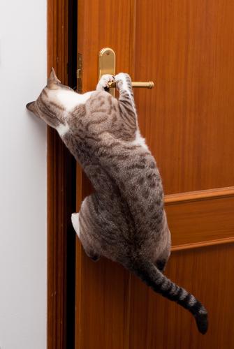 2 gato-abre-porta