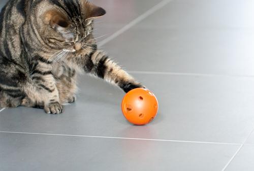 2 gato-com-bola