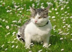 2 gato-com-coleira