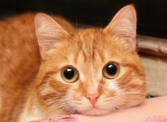 4 gato-enfermo