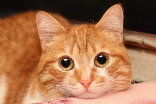 Como posso saber se meu gato está doente?