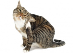 5 gatos-alergicos