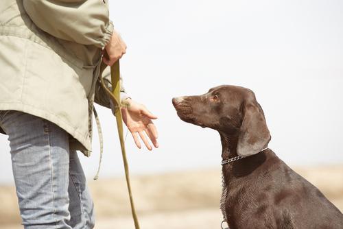 Dicas de como educar cachorro