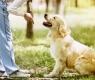 7 cachorro-atende