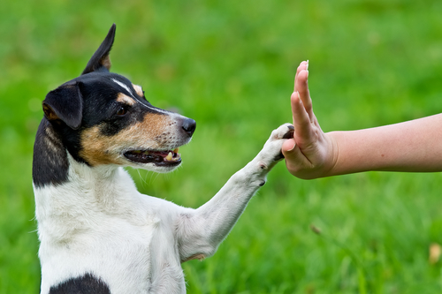 Saiba como educar cachorro