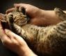 8 educar-gato