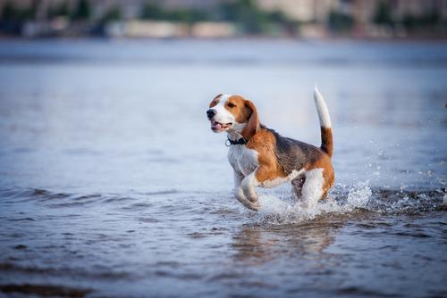 Como fazer seu cão perder o medo de água