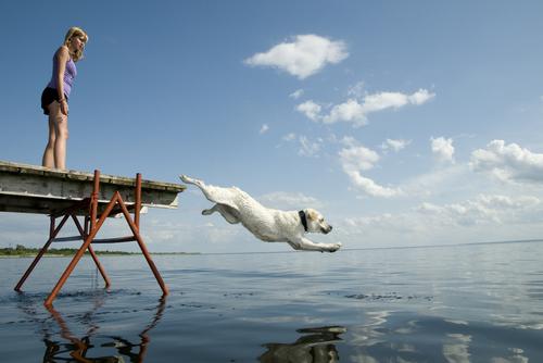 Como acostumar seu cachorro a não ter medo de água
