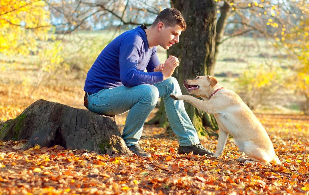 Adestramento canino: os 6 melhores truques para cachorros