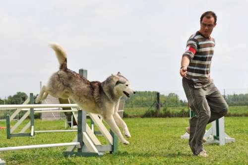 adestramento-canino-2
