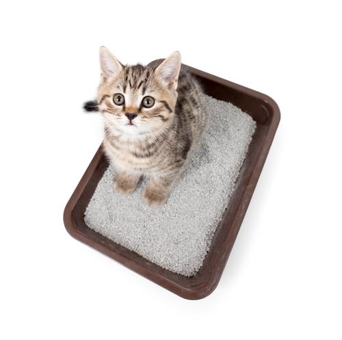 Areia caseira para gatos com materiais reciclados