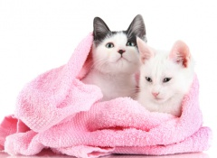 banho-gatos