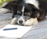 cão-com-artrose