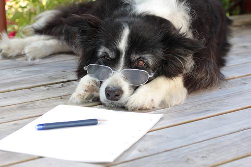 A artrose canina: diagnóstico e tratamento