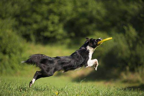 Veja como a artrose canina pode afetar seu animal
