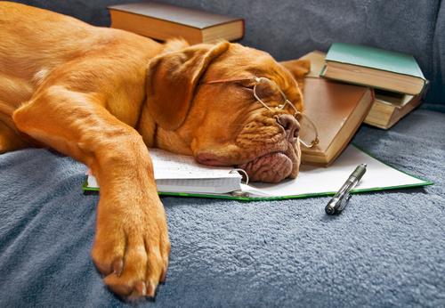 sonho dos cães