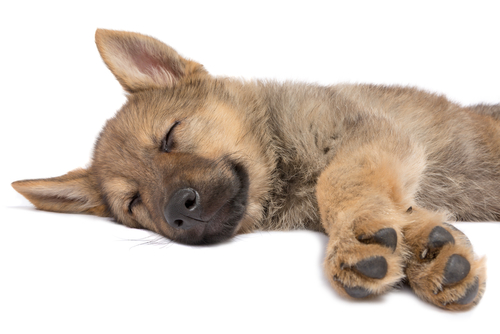 Saiba como é o primeiro mês de vida de um cãozinho