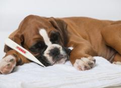 cachorro doente_1
