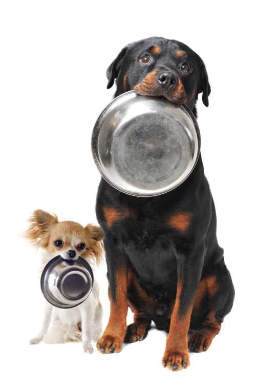 cachorro-nao-quer-comer