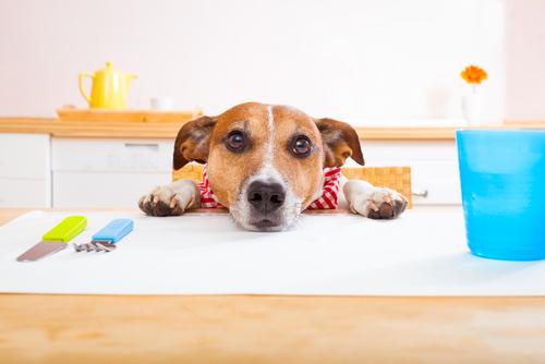 cachorro-pedindo-comida-2