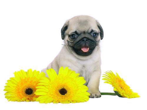 plantas que são umveneno para os cachorros