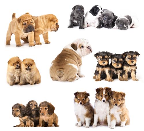 Dicas para cães inquietos: Normas de comportamento