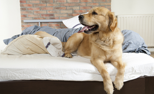 A hierarquia entre os cachorros