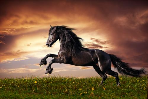 Você sabe de onde vêm os cavalos?