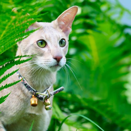 chocalho-gato-3
