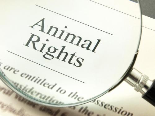 Conheça a Declaração dos Direitos dos Animais