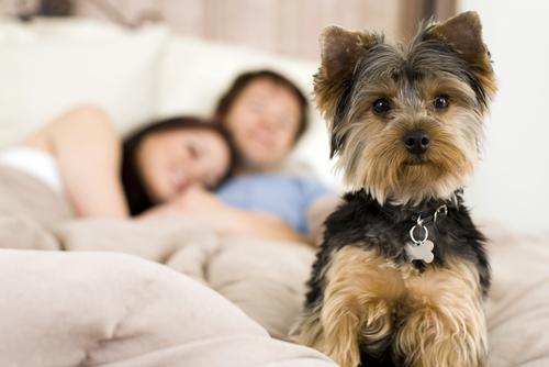 O que fazer quando o cachorro atrapalha seu sono