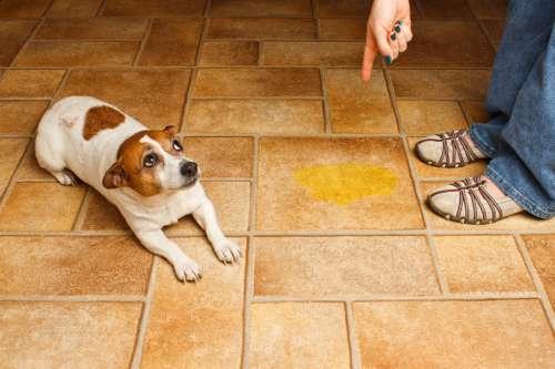 acabar com o odor de urina de cachorro
