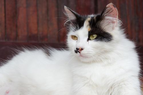 O instinto materno dos gatos… Como se comporta a futura mamãe?