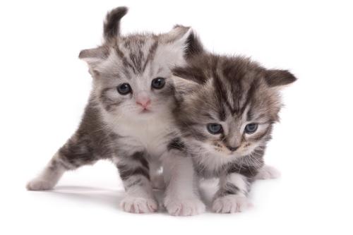 gatinhos-brincando