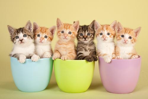 As cores dos gatos e seus significados