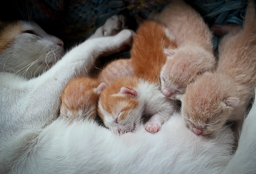 Quando separar um gato filhote de sua mãe