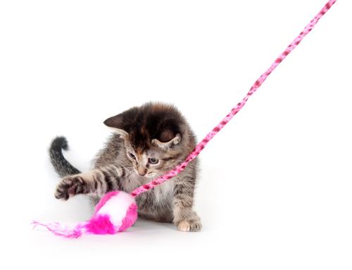 Como brincar com um gato. Qual é o jogo ou brincadeira preferida da sua mascote?