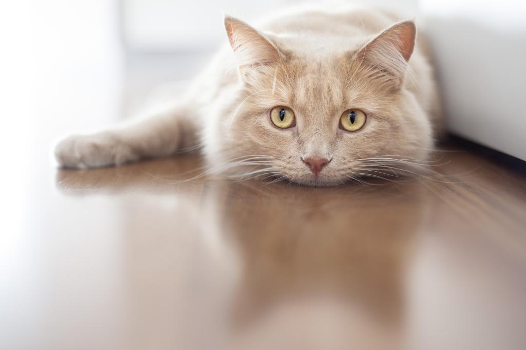 Sintomas de doenças nos gatos