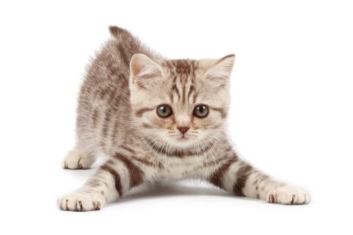 gatos brigam