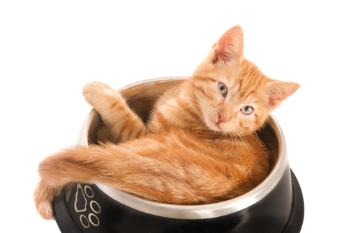 Comportamento dos gatos