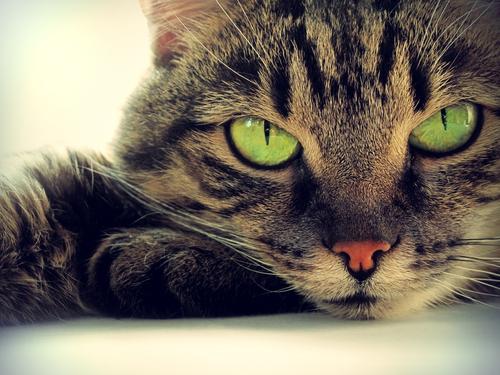 gatos-2