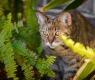 gatoseplantastoxicas