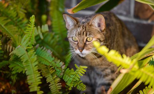 Cuidado: gatos e plantas tóxicas!