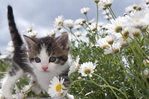 gatoseplantastoxicas3