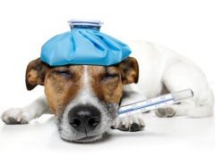 hemorragias-perros