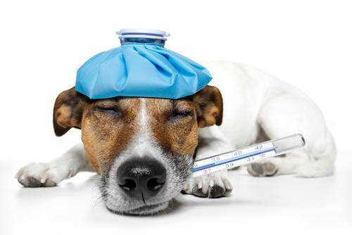 Sintomas de hemorragia em cães
