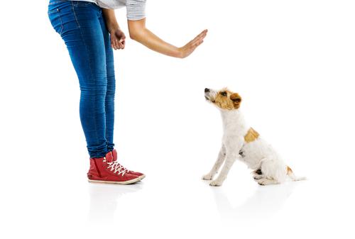 mal-comportamento-cachorro-2
