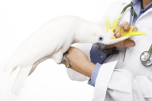 Como preparar um animal para uma cirurgia