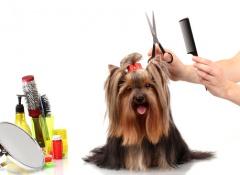pentera seu cão